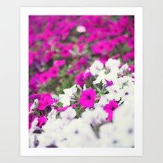 Pink And White Spring Stars Art Print