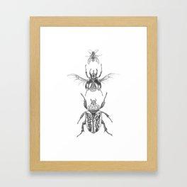 Beetle Drawing - Pencil Framed Art Print