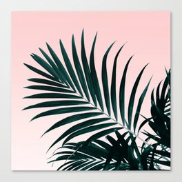 Modern tropical palm tree photography pastel pink ombre gradient Canvas Print