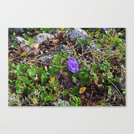 Season's End Canvas Print