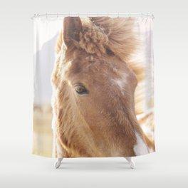 Golden Horse Photograph Shower Curtain