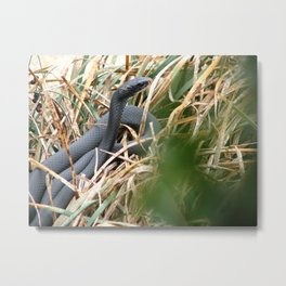 Snake in Waiting Metal Print