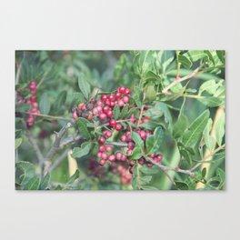 Happy berry IV Canvas Print