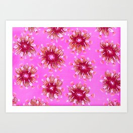 Raspberry Rose Art Print