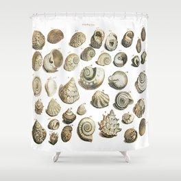 Sea Shells from Gentlemens Magazine 1755 Shower Curtain