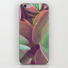Jade + Pink iPhone & iPod Skin