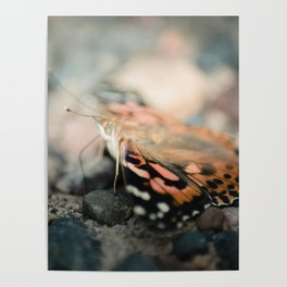 Butterfly (macro) Poster