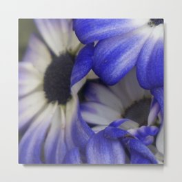 Blushing Blue Metal Print
