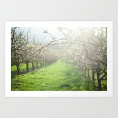 Sunlight in the Orchard Art Print