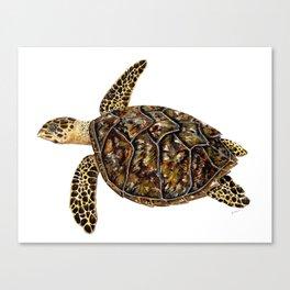 Hawksbill sea turtle (Eretmochelys imbricata) Canvas Print