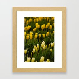 It's tulip mania! Framed Art Print