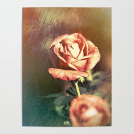 Scents of Roses Poster