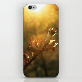 Sunset Leaf iPhone Skin