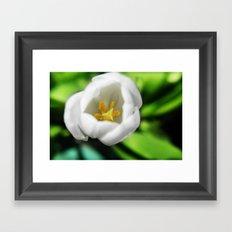 Tulip Stamen Framed Art Print