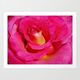 Luscious Rose Art Print