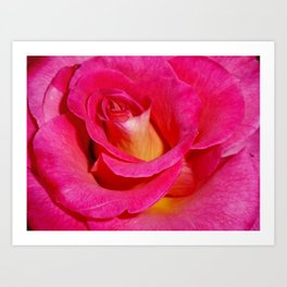 Luscious Rose Art Print