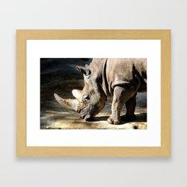 White Rhinoceros Framed Art Print