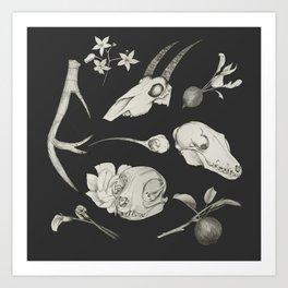 Bones and Botanical Sketches Art Print