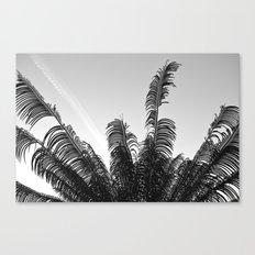 DC Palms Canvas Print