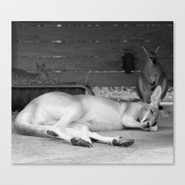 sleepy head Canvas Print