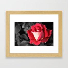Fall Rose Framed Art Print