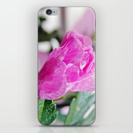Pink Musk Mallow Rolled-up iPhone Skin
