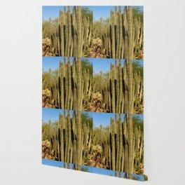 Organpipe Cactus Wallpaper
