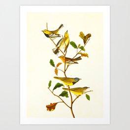 Birds & Plants Art Print