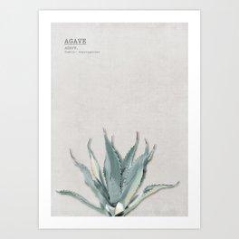 Green Agave 01 Art Print