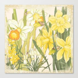 Vintage Floral Paper:  Spring Flowers on Shabby White -Daffodils Canvas Print