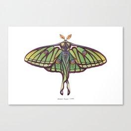 Spanish Moon Moth (Graellsia isabellae) Canvas Print