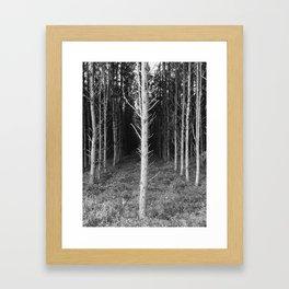 Tree Perspective Framed Art Print