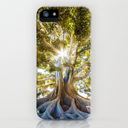 Tree Paradise (Color) iPhone Case