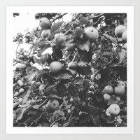 monochrome apples Art Print
