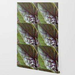 Basil Wallpaper