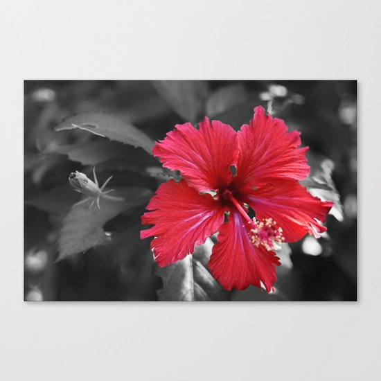 Color my Garden Red Canvas Print