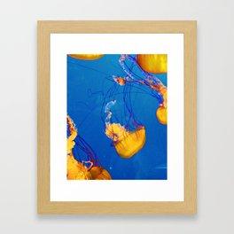 Orange Jellies Framed Art Print