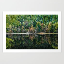 Forest Reflection Art Print