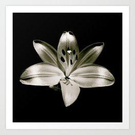 Lily Limelight Art Print
