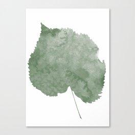 Tilia tomentosa leaf Canvas Print
