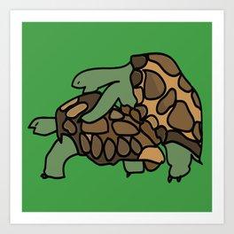 Turtle Galapagos mate love mating  Art Print