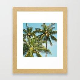 Coconut Palm Trees Sugar Beach Kihei Maui Hawaii Framed Art Print