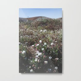Spring in the Mojave Desert Grasslands Metal Print