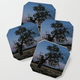 The Moody Tree. Coaster