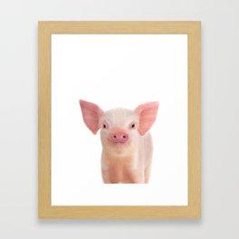 Baby Pig Framed Art Print