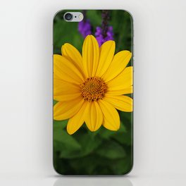 Prairie gold with lavender-violet companions 7489 iPhone Skin