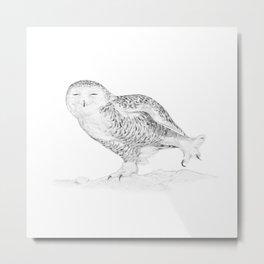 The Snowy Owl  Metal Print
