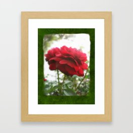 Red Rose with Light 1 Blank P1F0 Framed Art Print