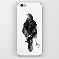 hawk iPhone & iPod Skins featuring Hawk by Hana Robinson