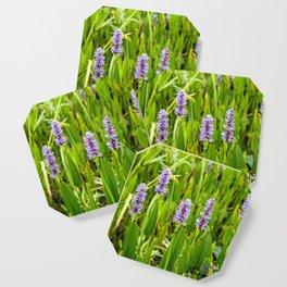 purple flowers Coaster